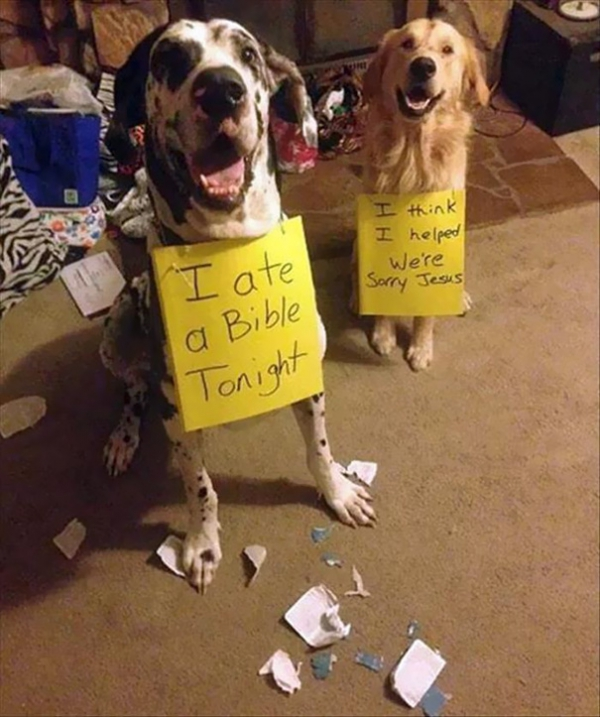 dog shaming 17 adorable partners in crime 4