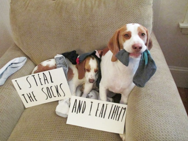 dog shaming 17 adorable partners in crime 5