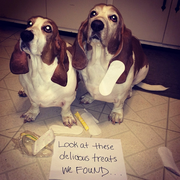 dog shaming 17 adorable partners in crime 6