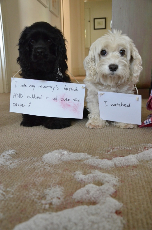 dog shaming 17 adorable partners in crime 7