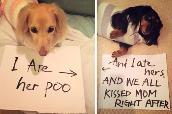 dog shaming 17 adorable partners in crime 8