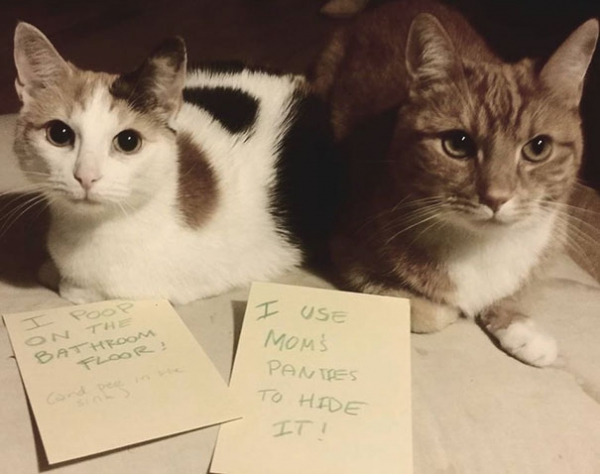 dog shaming 17 adorable partners in crime 9