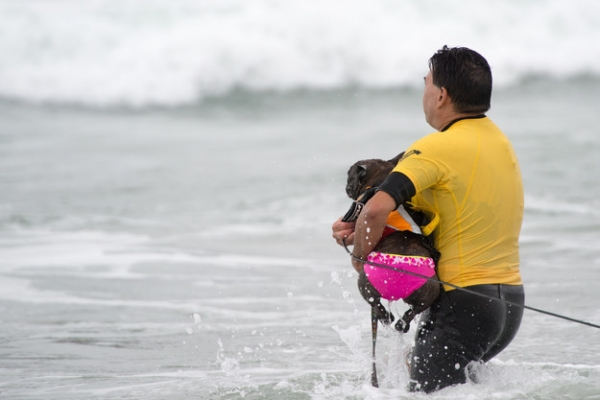 dog surfing is something you shouldnt miss 15 pics 13