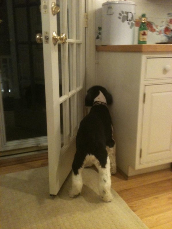 dogs against doors witness these wicked battles 12 pictures 1