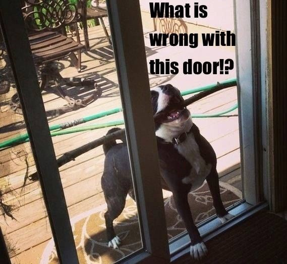 dogs against doors witness these wicked battles 12 pictures 7