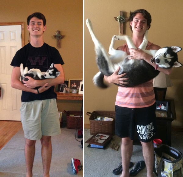 dogs and their owners  before and now  10 pictures 7