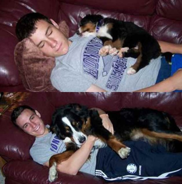 dogs and their owners  before and now  10 pictures 8