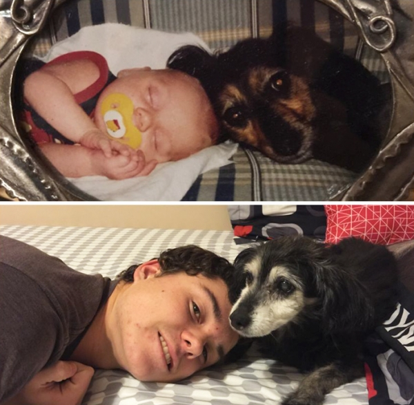 dogs and their owners  before and now  10 pictures 9