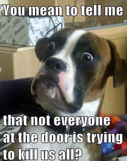 dogs with problems we just dont get 10 pictures 1