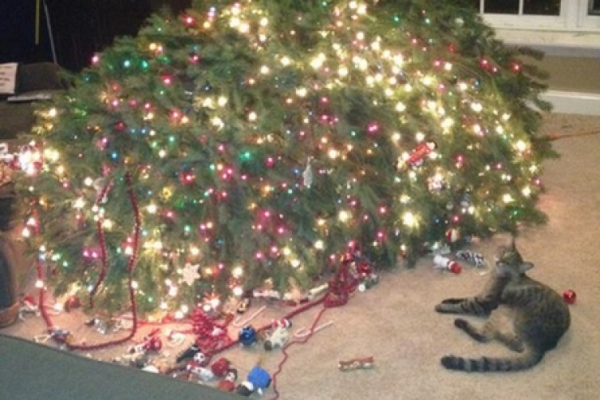 dont be angry at me its christmas 12 pictures 1