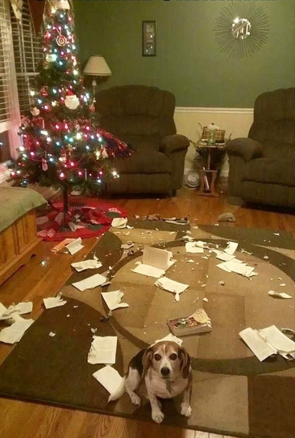 dont be angry at me its christmas 12 pictures 11