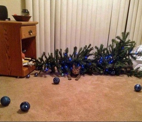 dont be angry at me its christmas 12 pictures 12