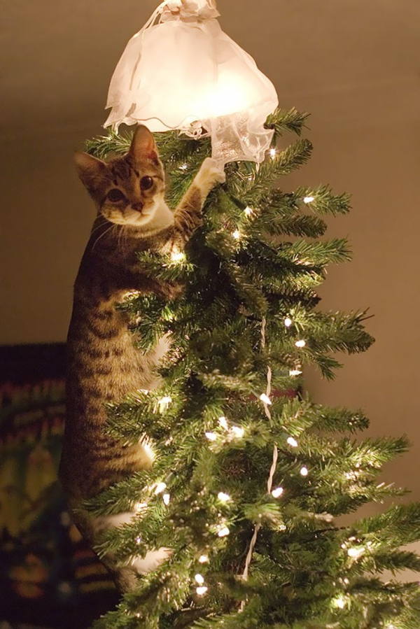 dont be angry at me its christmas 12 pictures 3