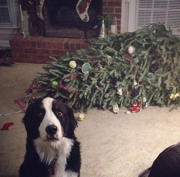 dont be angry at me its christmas 12 pictures 4