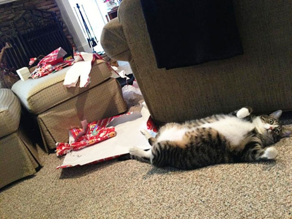 dont be angry at me its christmas 12 pictures 7