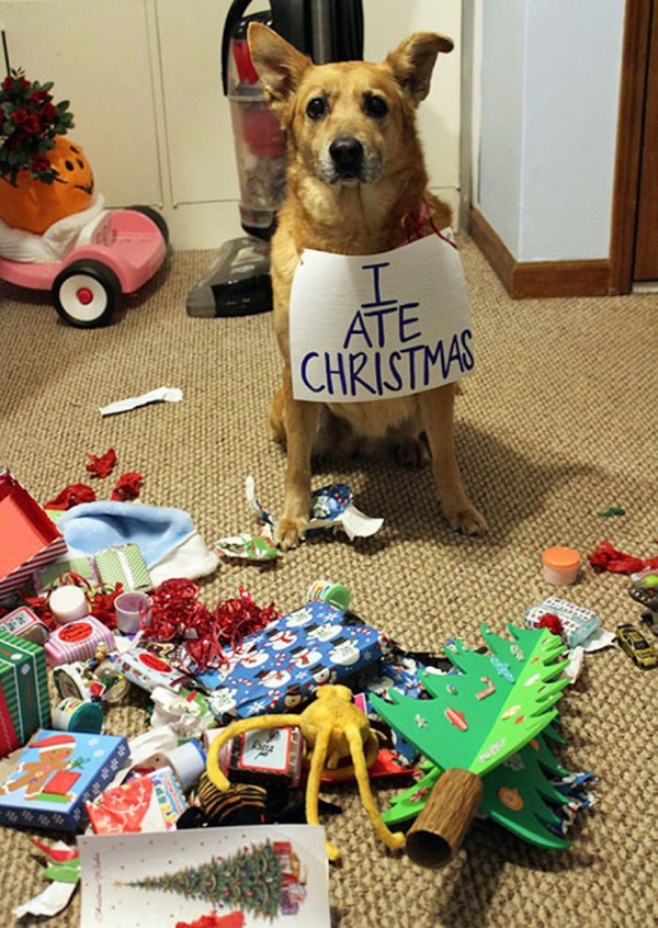 dont be angry at me its christmas 12 pictures 8