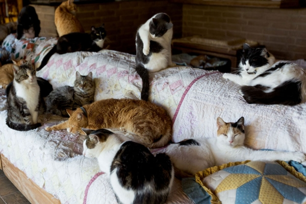 dream coming true for every stray cat 22 pics 10