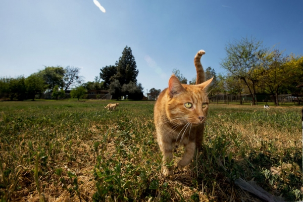 dream coming true for every stray cat 22 pics 4
