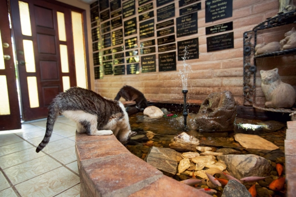 dream coming true for every stray cat 22 pics 6