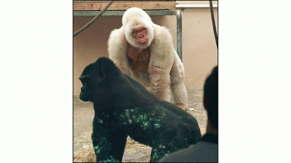 even with albinism these 13 animals are enjoying their lives to the fullest 1