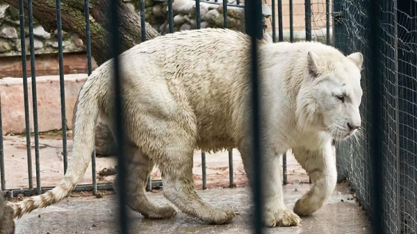 even with albinism these 13 animals are enjoying their lives to the fullest 10