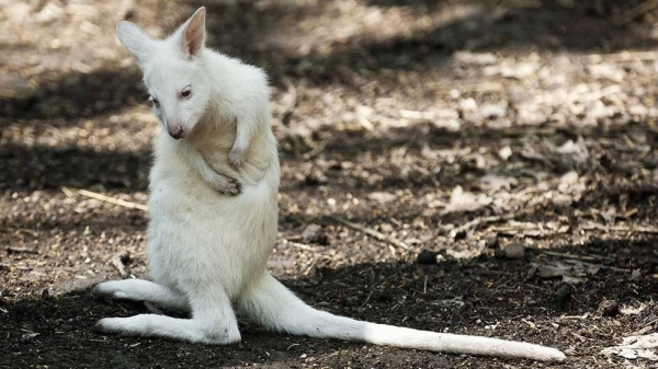 even with albinism these 13 animals are enjoying their lives to the fullest 12