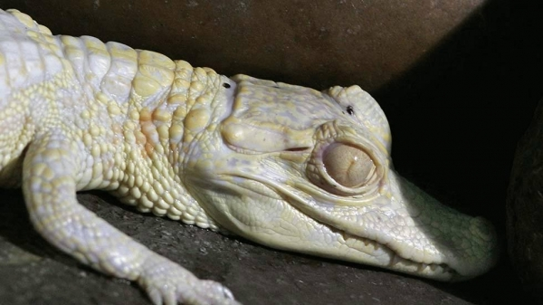 even with albinism these 13 animals are enjoying their lives to the fullest 3