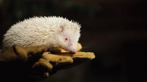 even with albinism these 13 animals are enjoying their lives to the fullest 4