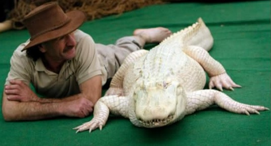 even with albinism these 13 animals are enjoying their lives to the fullest 6