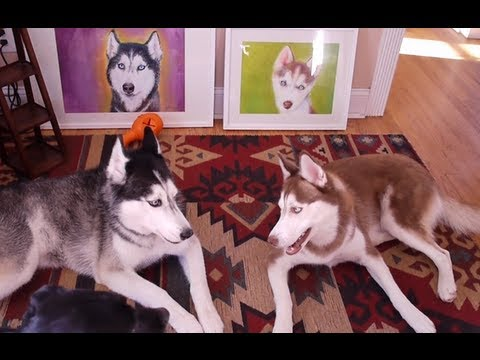 ever wondered if animals could speak mishka is certainly trying 3