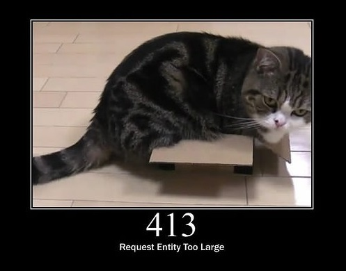 everything can be explained through cats 11