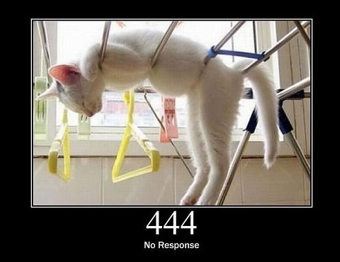 everything can be explained through cats 13