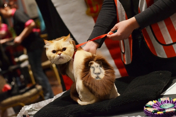 excessive grooming decoration or cruelty 19