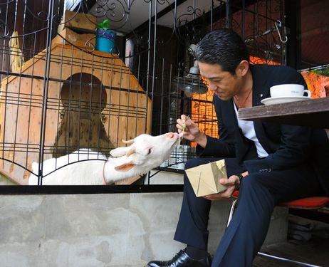 exotic animal cafes of japan 10 pictures 10