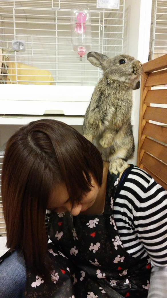 exotic animal cafes of japan 10 pictures 2