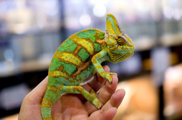 exotic animal cafes of japan 10 pictures 3