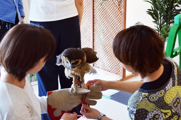 exotic animal cafes of japan 10 pictures 4