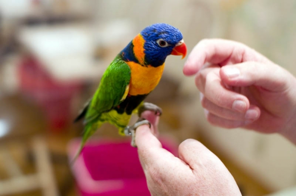 exotic animal cafes of japan 10 pictures 5