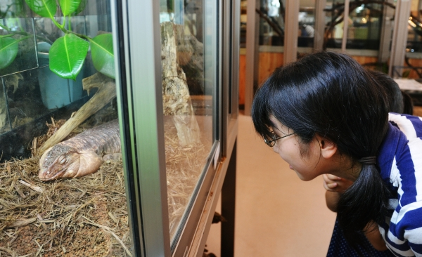 exotic animal cafes of japan 10 pictures 7