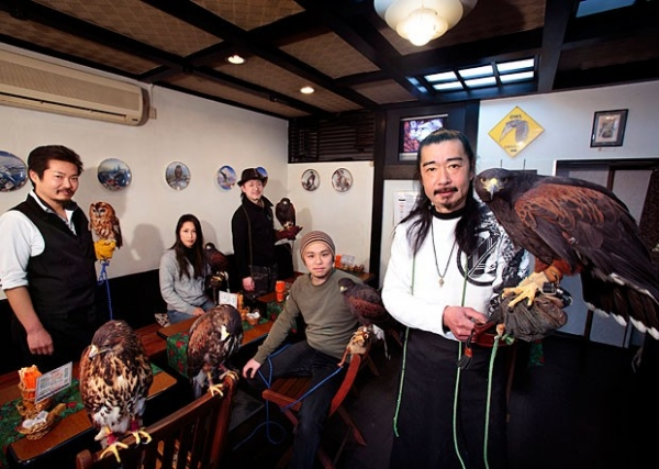 exotic animal cafes of japan 10 pictures 8