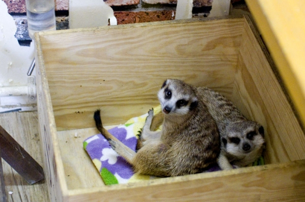 exotic animal cafes of japan 10 pictures 9