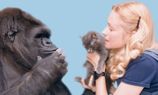 famous gorilla got some new friends 12 pictures 11