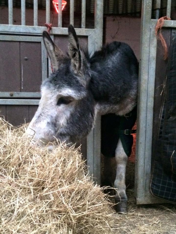 famous rescue of a smiling donkey 10 pictures 10