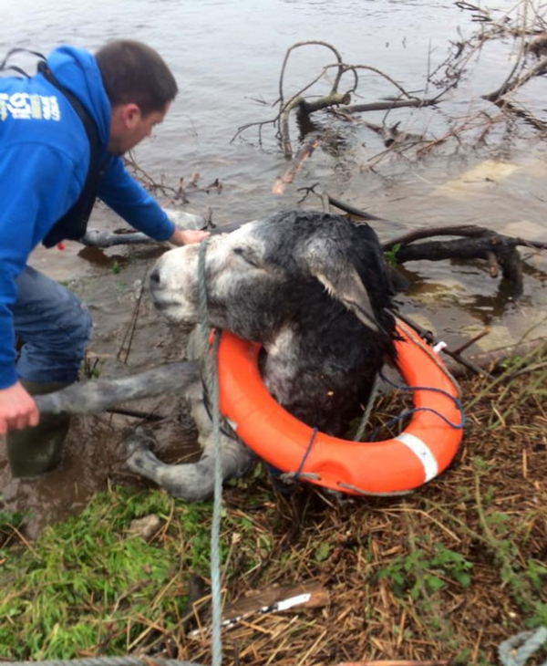 famous rescue of a smiling donkey 10 pictures 4