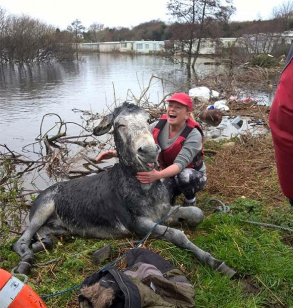 famous rescue of a smiling donkey 10 pictures 5