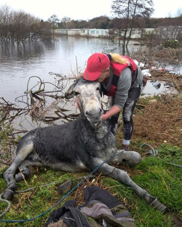 famous rescue of a smiling donkey 10 pictures 6