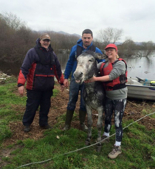 famous rescue of a smiling donkey 10 pictures 7