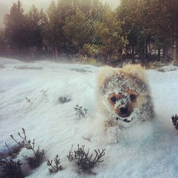 first snow and all the sweet reactions 12 pics 12