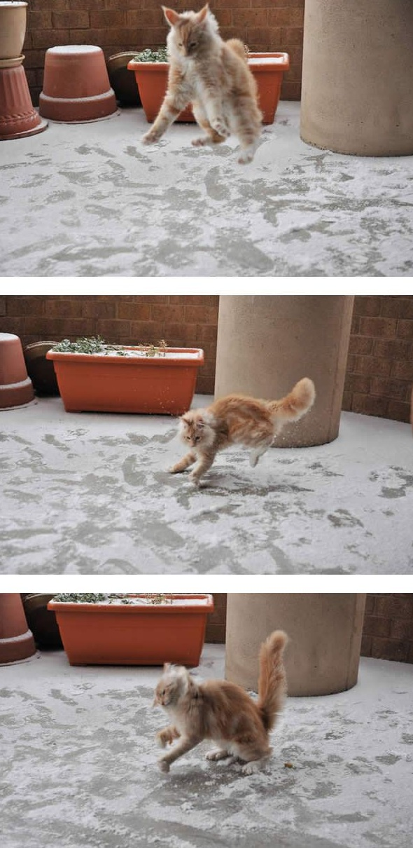 first snow and all the sweet reactions 12 pics 2