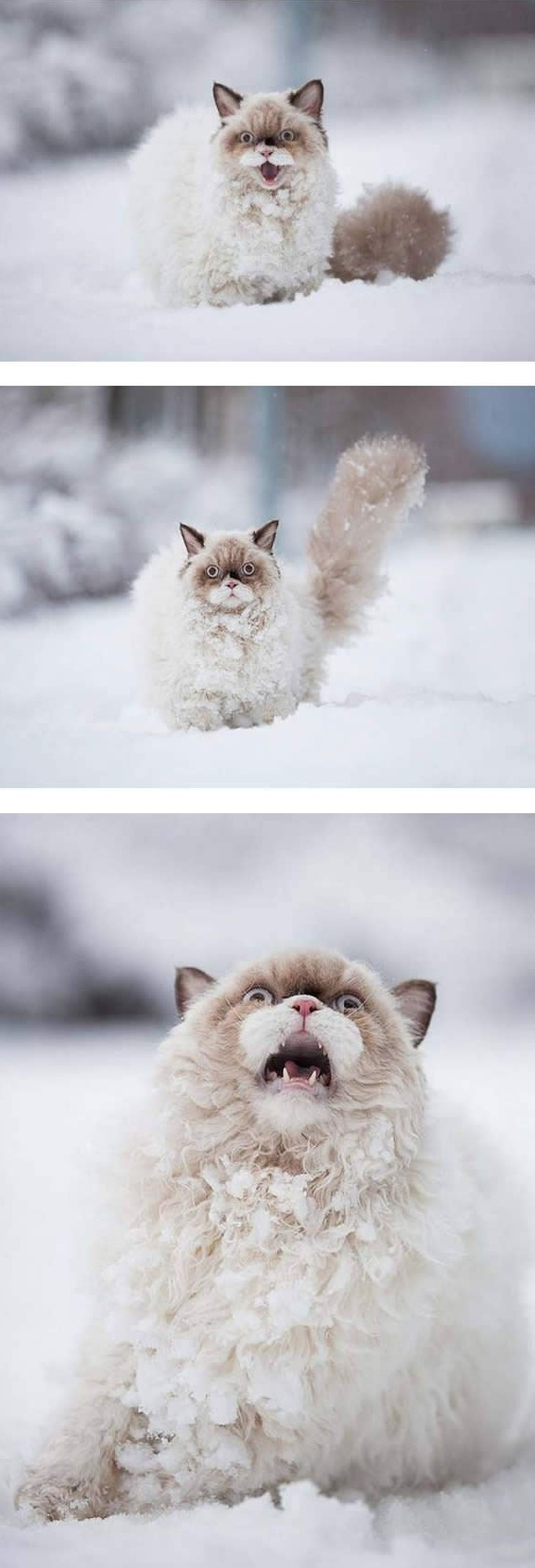 first snow and all the sweet reactions 12 pics 3